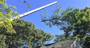 Residential Tree Services in Jacksonville FL