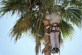 Proper Tree Pruning in Jacksonville, Florida