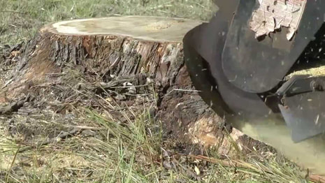 Tree Stump Grinding Jacksonville FL