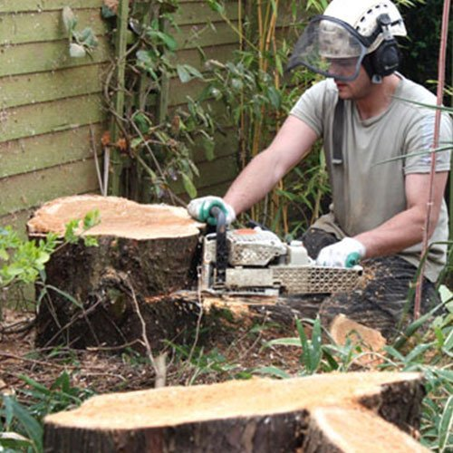 Jacksonville Tree Service, Stump Grinding