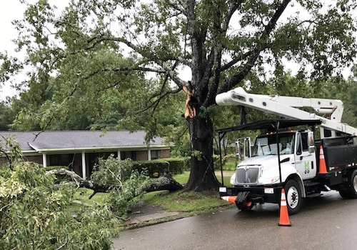 Storm Tree Damage Jacksonville Florida