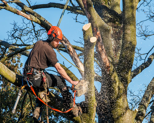 Tree Trimming Service from Jacksonville Tree Service